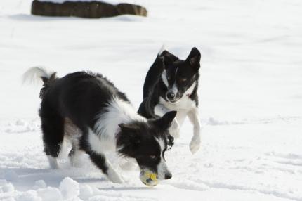 オーナ-さんと一緒・2頭で雪遊び